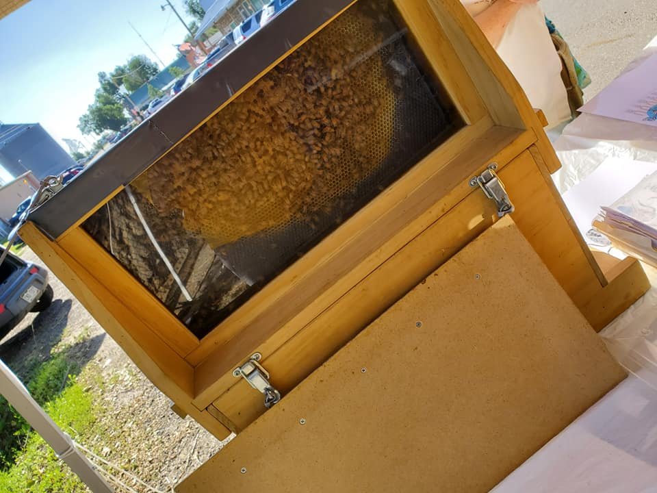 booth observation hive